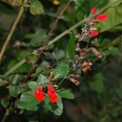 flowersred1