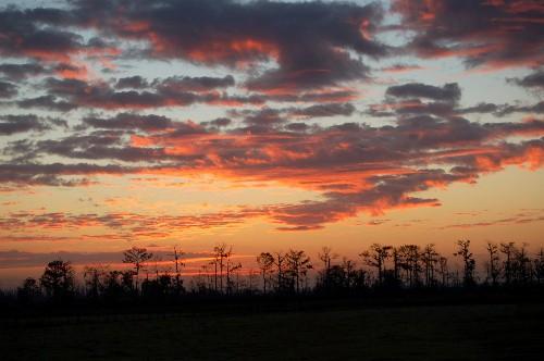 cypressunrise.jpg