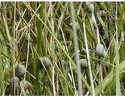marshcreatures1.jpg