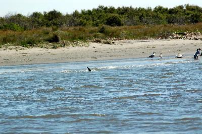 stranded-dolphin.jpg
