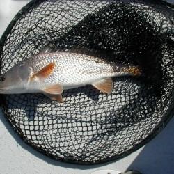 2208redfish