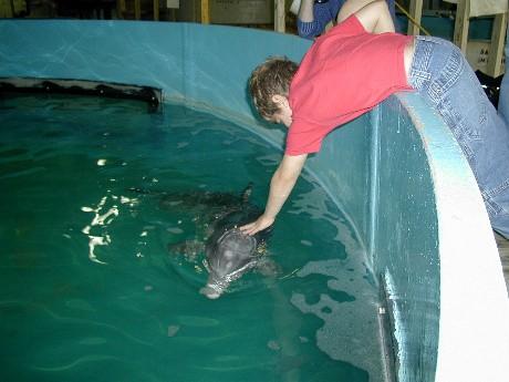 Dolphin Rescue