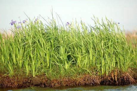 Iris Island 2
