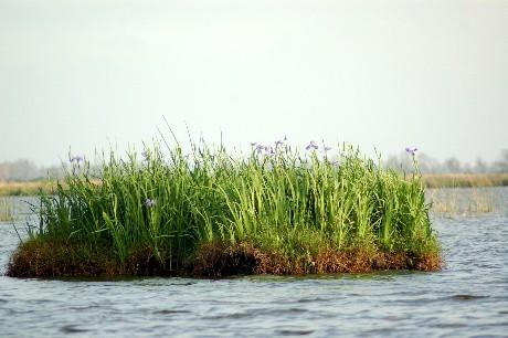 Iris Island 1