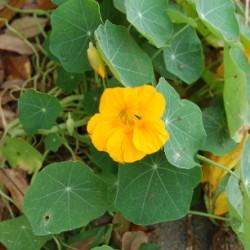 springwildflowersmyyard-009
