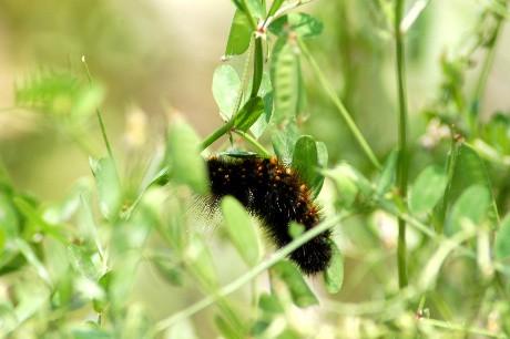 Yummy caterpillar