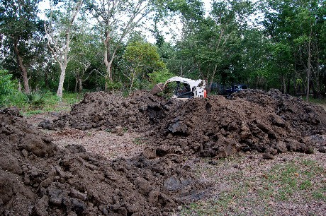 Dirt and Bobcat