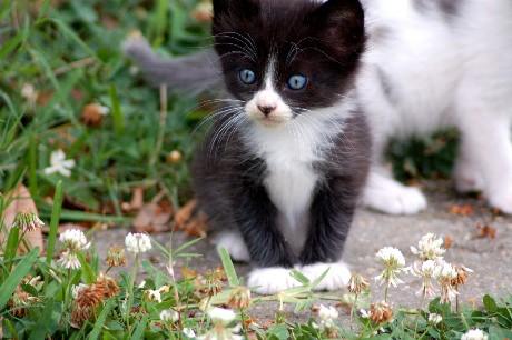 ikes.kittens 004