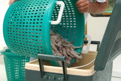 shrimp.ice.chest