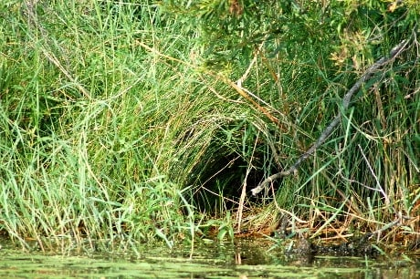 Animal burrow