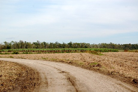 canefield.road