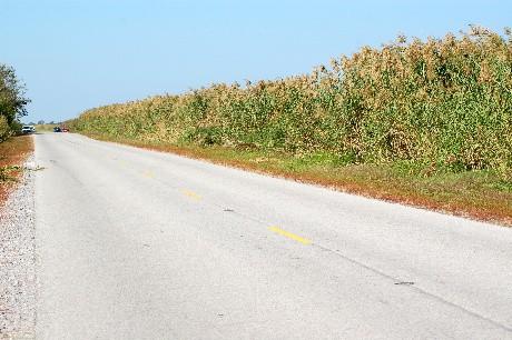 Roadside Cane