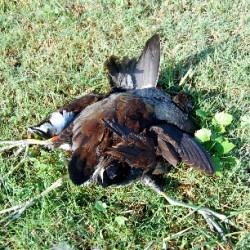 duck-hunt-043