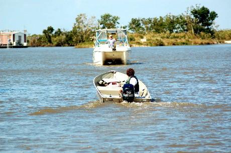 Termite in boat