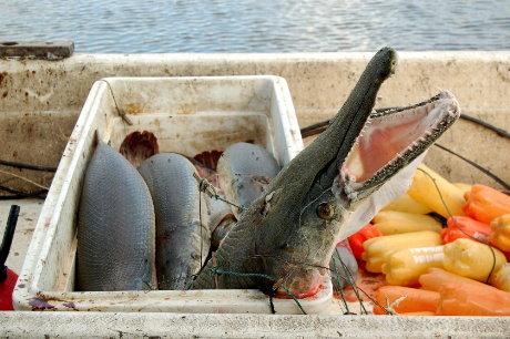 Plastic Bottles and Prehistoric Fish