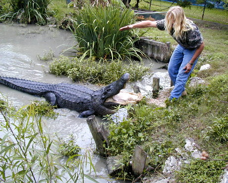 ZZ's dad playing with this 13-foot gator