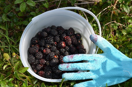 Southern Dewberries and Fashion Hand Protection