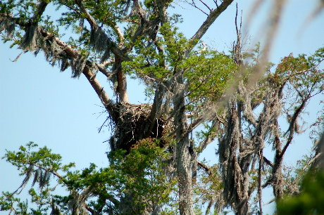Eagles' Nest in Cypress