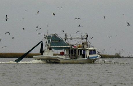 Inland Skiff shrimping
