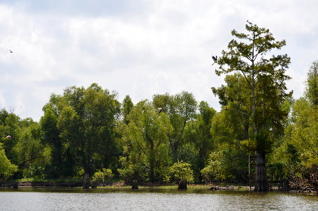 Experience the Atchafalaya Basin