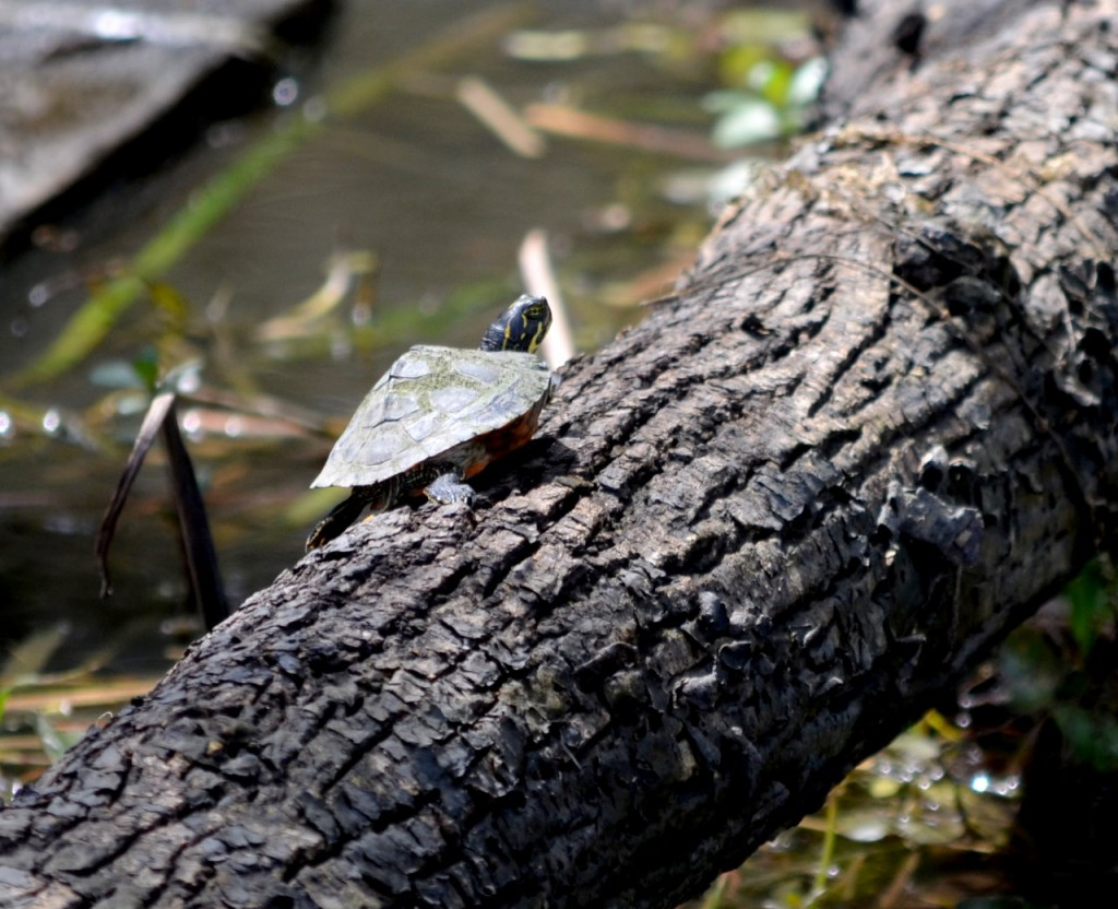 Spring-time Wetland Education