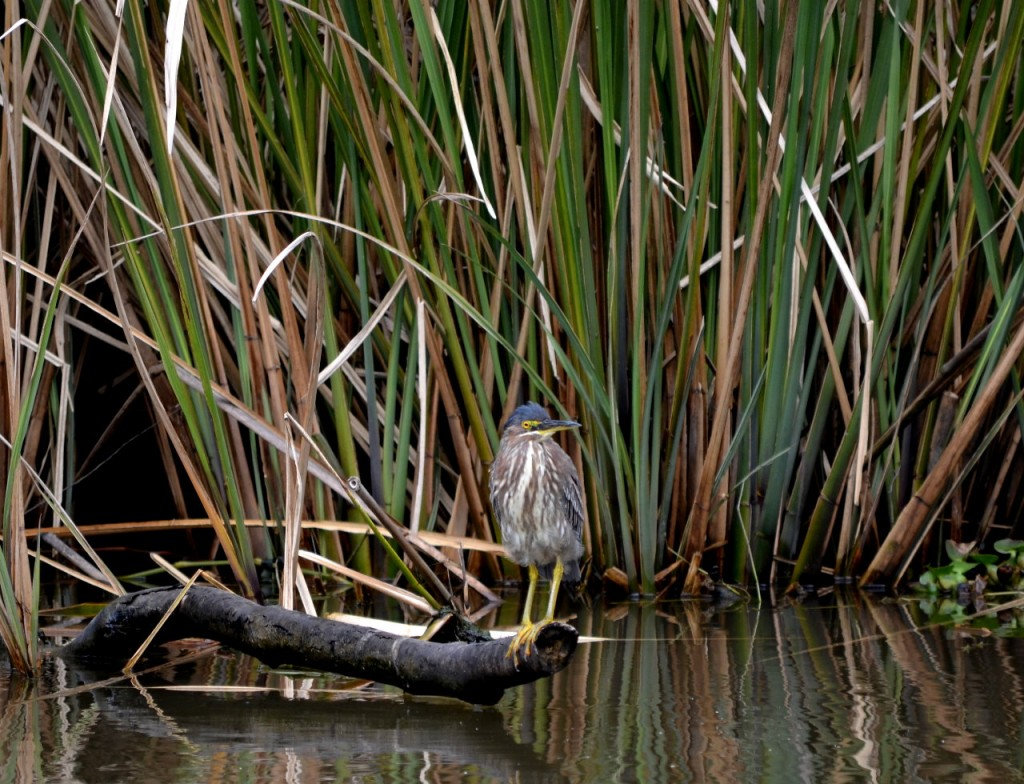 First Wetland Tour of 2014