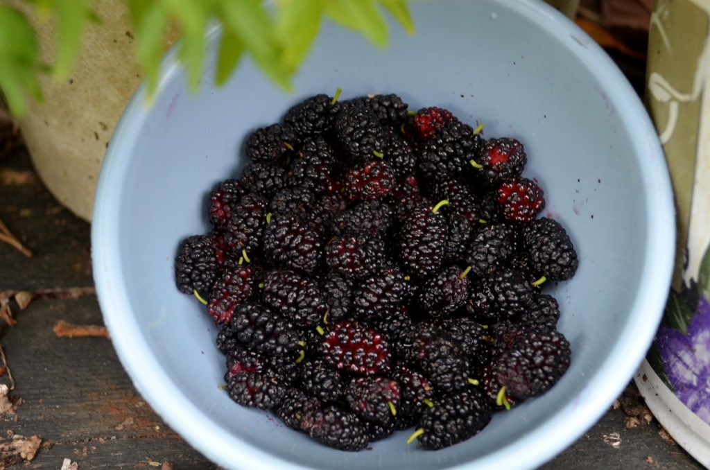 Memories, Mulberries, and More