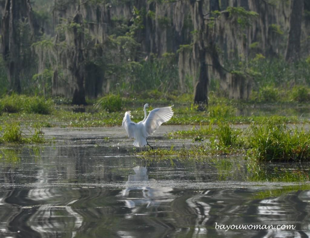 Mandalay Swamp