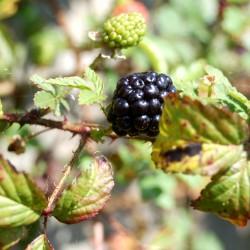 1st.berries.fishermans.retreat-21