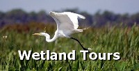 Wetland Eco-Tours