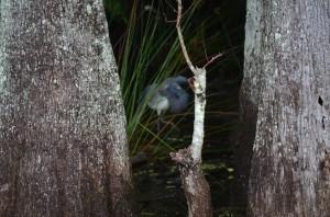 Mystery Bird 1
