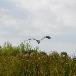 heron-landscape