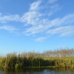 marsh-landscape