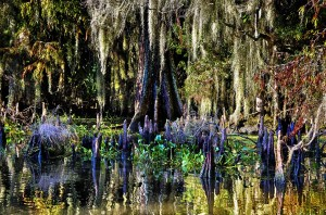 Linda Medine - Swamp