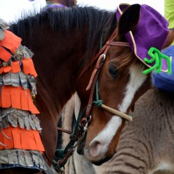 Horse-with-Purple-Hat2