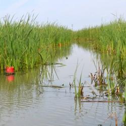 Crawfish-pond