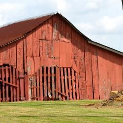 Mrs.-Rose-barn