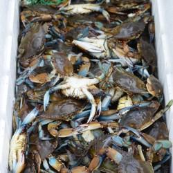 crabs-1fb