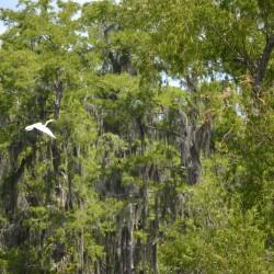 mandalay-egret
