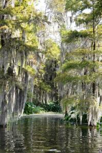 cypress-scene