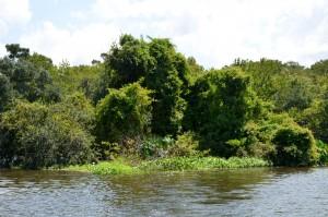 green-heron-island