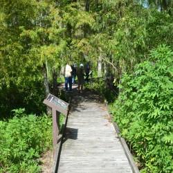 Garden-City-boardwalk