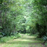 Palmetto-Trail