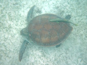 seaturtles-1