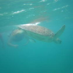 seaturtles-2