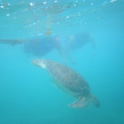 seaturtles-3