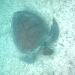 seaturtles-4
