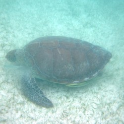 seaturtles-5