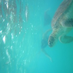 seaturtles-6