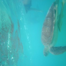 seaturtles-8
